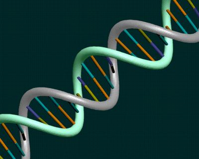 DNA del Trader Scientifico ®  -  Dai dadi agli attrattori caotici
